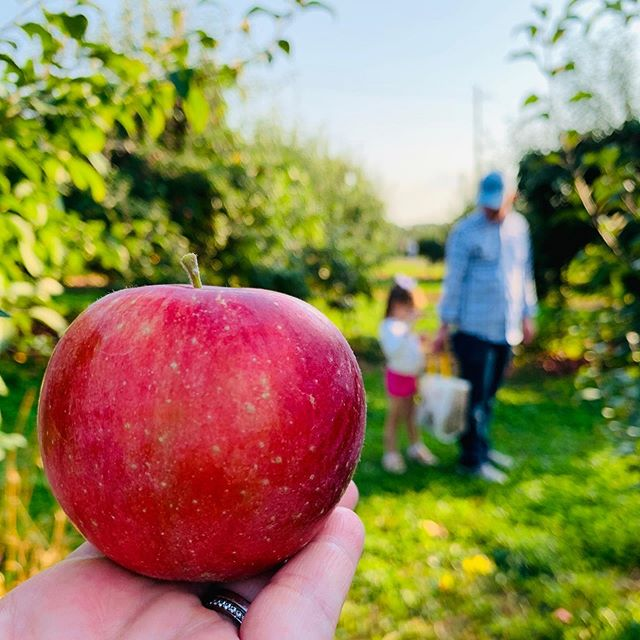 """Happy fall from the apple orchard! Really trying to lean in on this whole """"living up North"""" thing but now I haven't a clue what I'm going to do with 50+ apples! #bartonorchards #mysweetadelinegirl"""