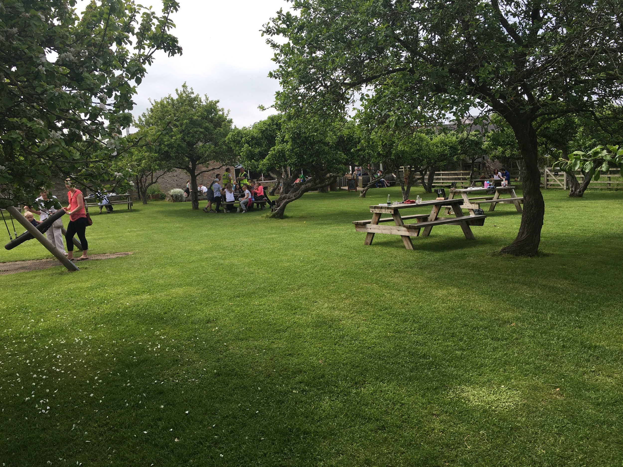 The gorgeous orchard has plenty of picnic bench type seating.