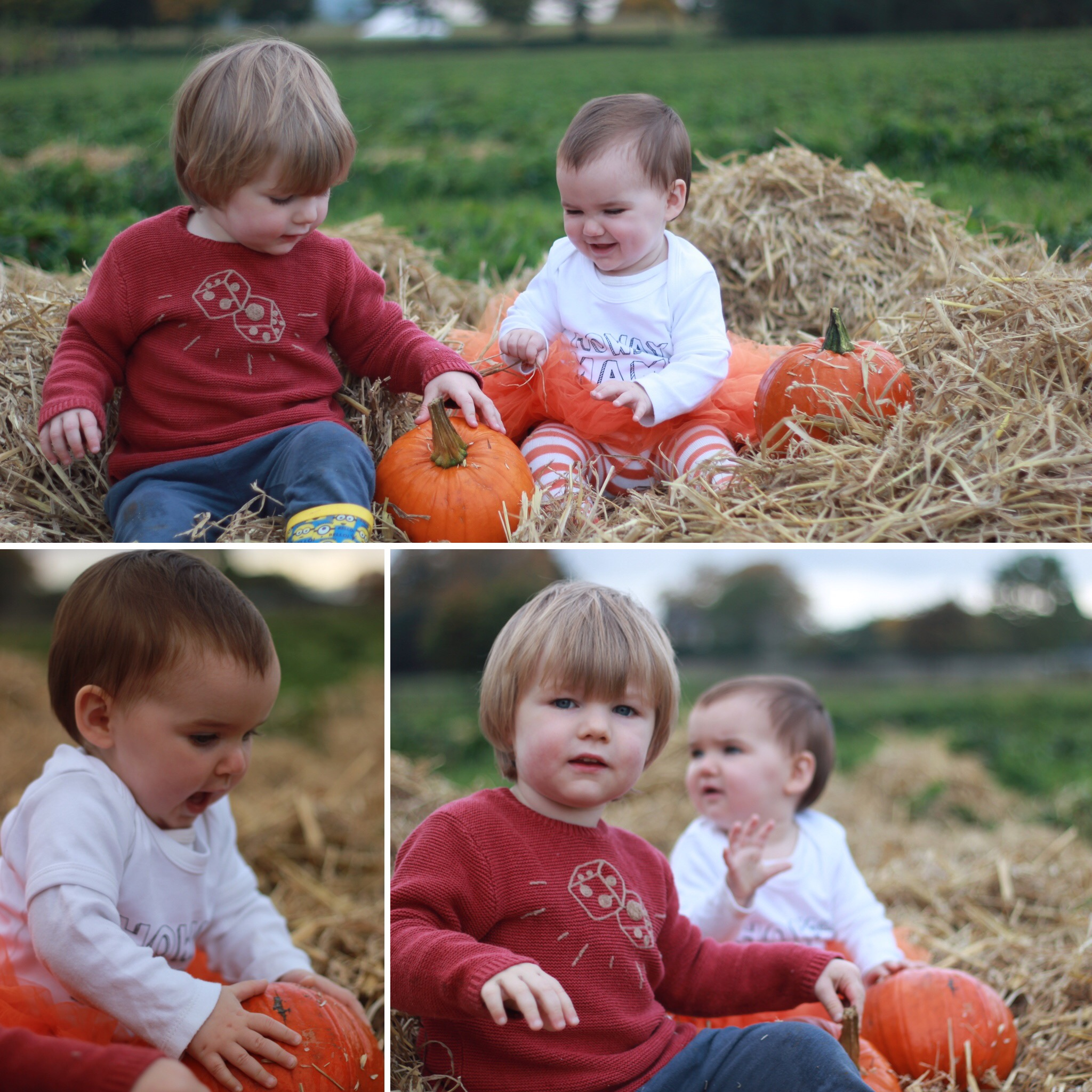 Brocksbushes farm shop and tea room Halloween 2016 Northumberland pumpkin patch kids events baby toddler. Eileen and Joe children's entertainer dressed as a witch, with a toddler. Siblings play in a pumpkin patch.