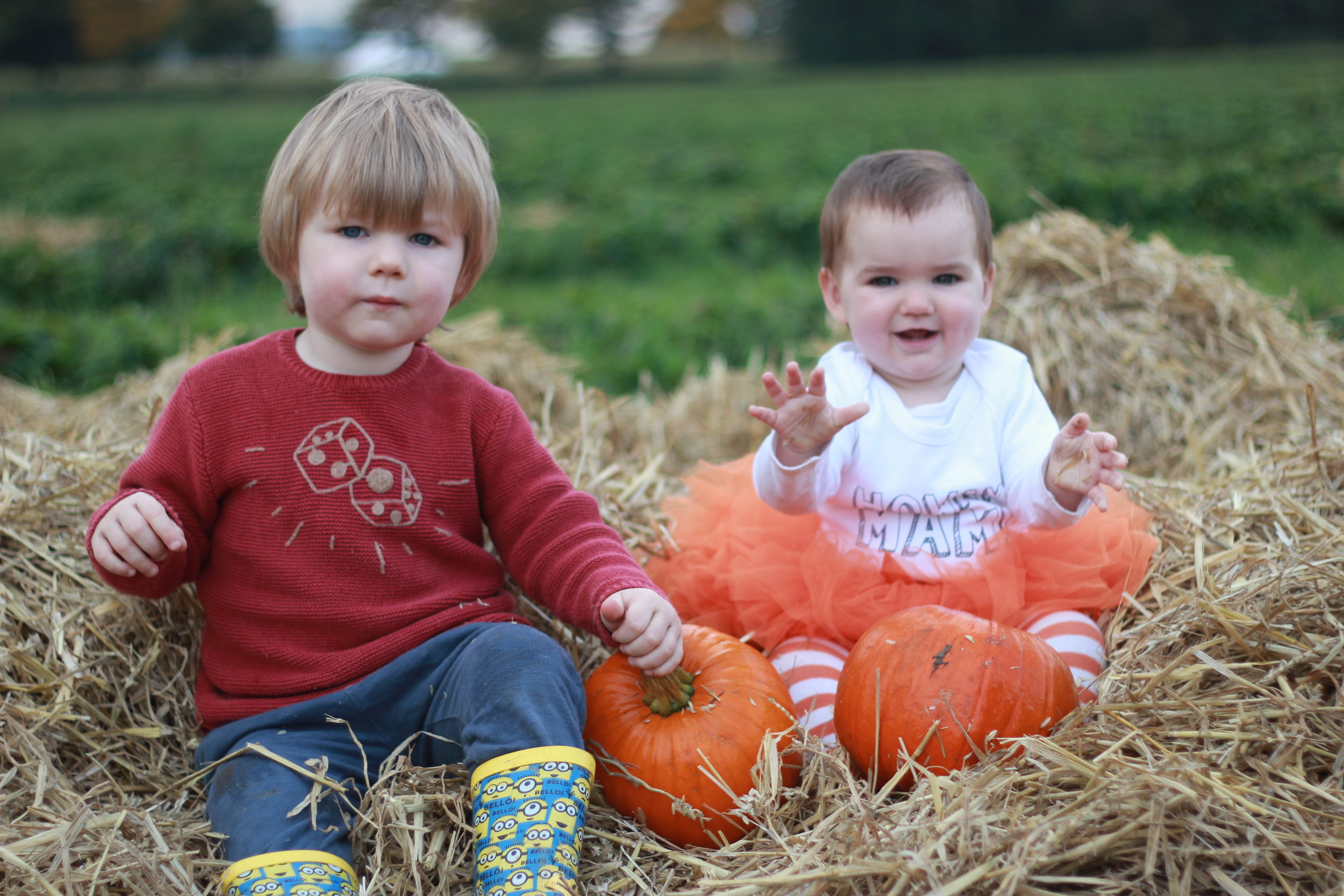 Brocksbushes farm shop and tea room Halloween 2016 Northumberland pumpkin patch kids events baby toddler. Eileen and Joe children's entertainer dressed as a witch, with a toddler. Siblings play in a pumpkin patch