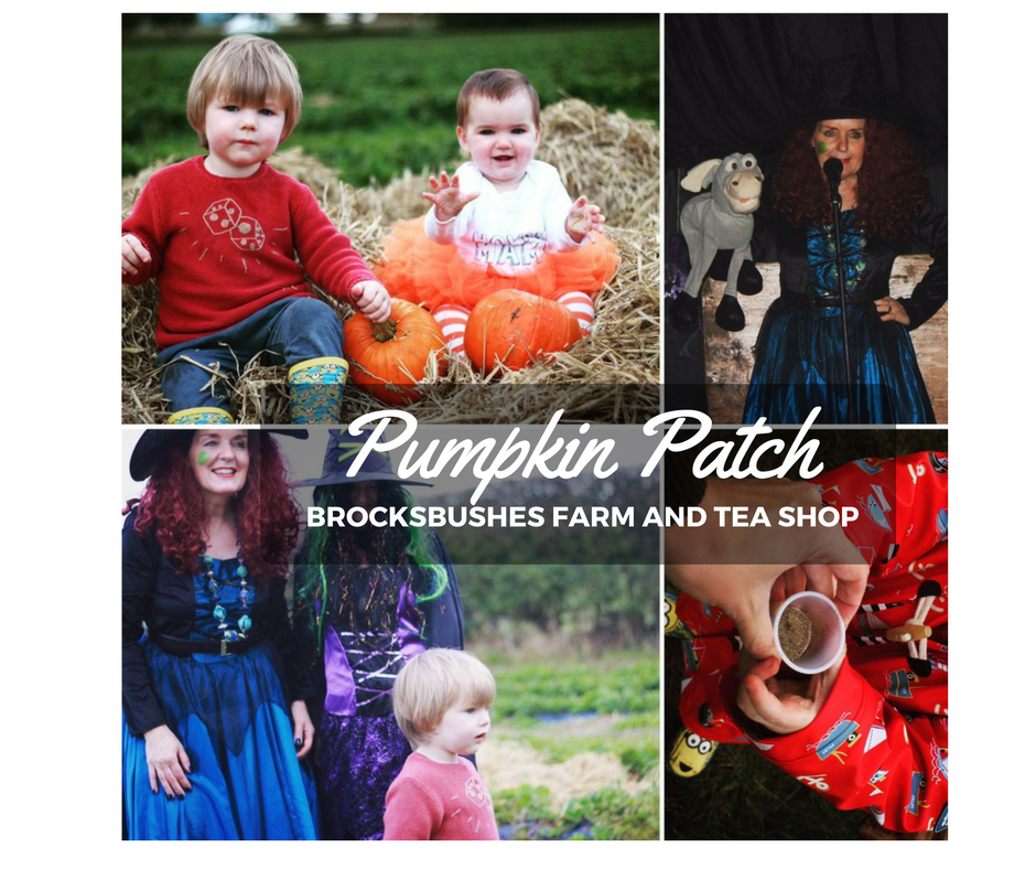 Brocksbushes pumpkin patch review photographs North East pumpkin patch. Pumpkin Photo Kids Sprog on the Tyne