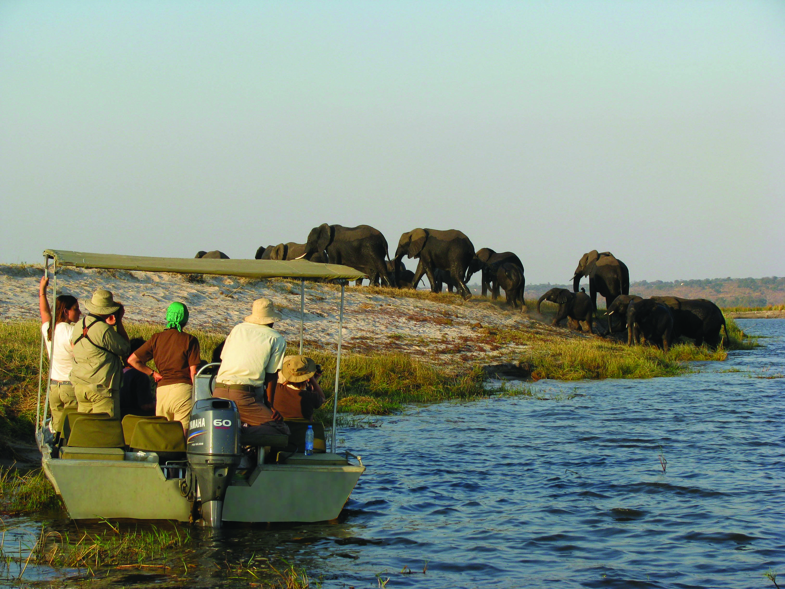 AmaWaterways offers private boat safaris along the Chobe riverbank.