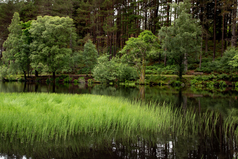 Ness Grass