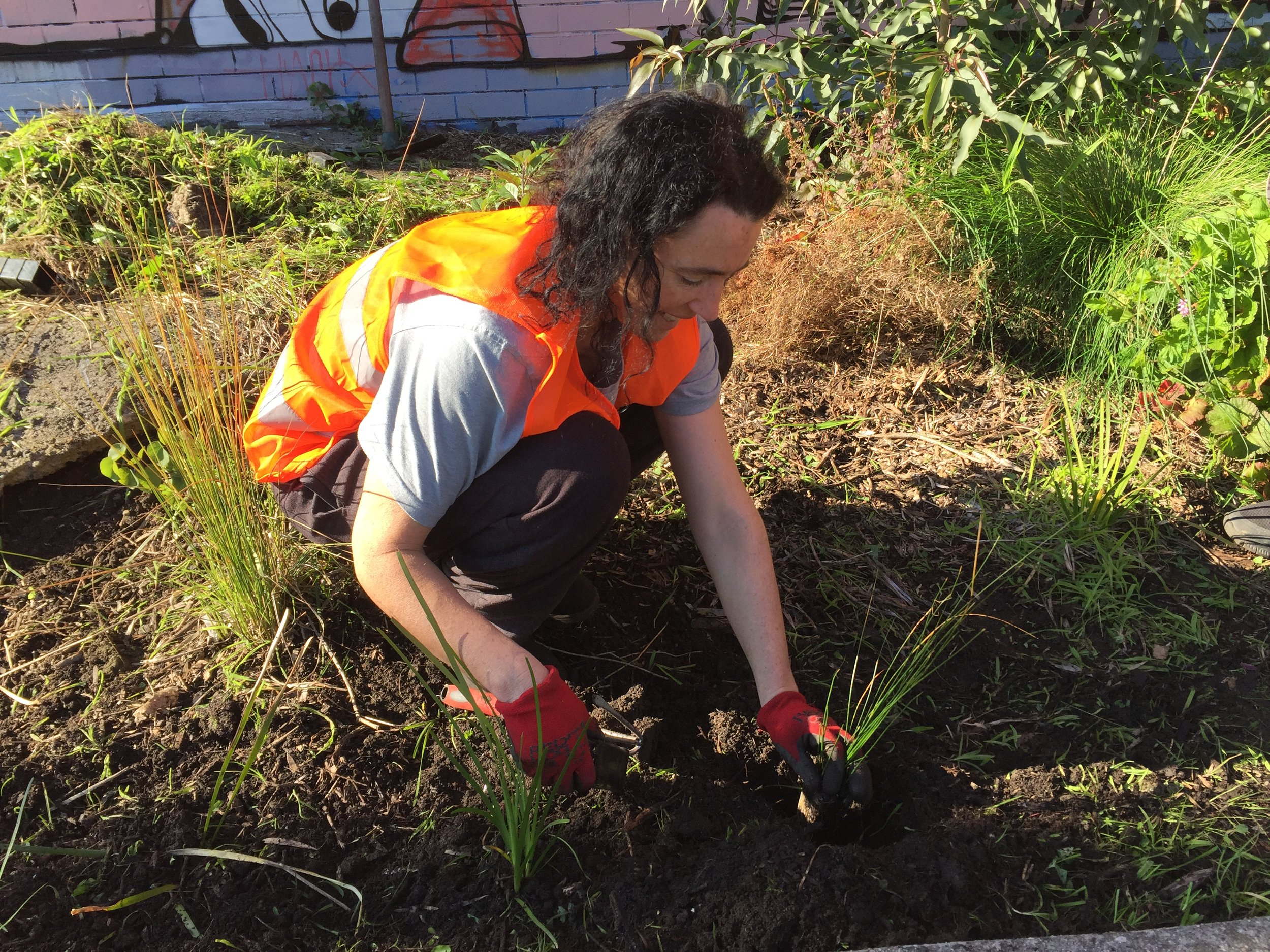 planting grasses.JPG