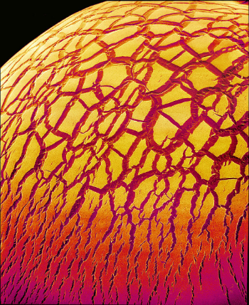 Coloured Scanning Electron Micrograph of the cracked surface of a dried droplet of glue. Credit: Susumu Nishinaga.