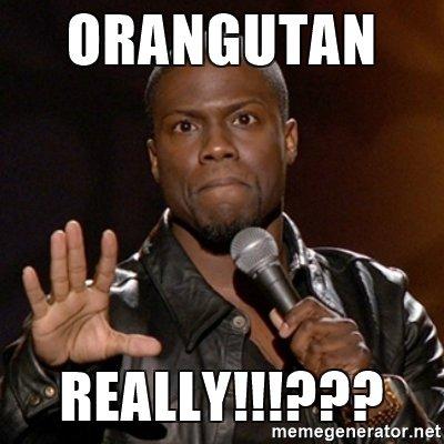 orangutan-really.jpg
