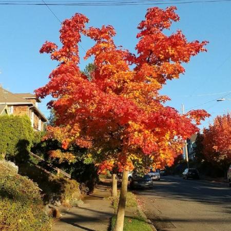 autumntree.jpg