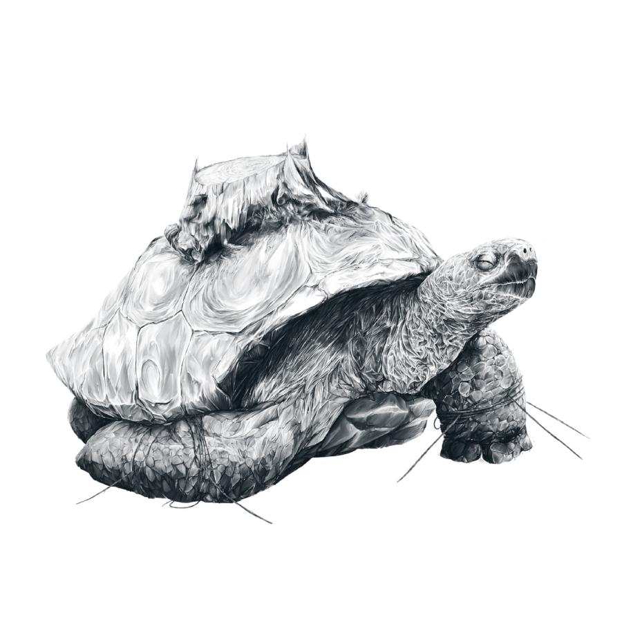 Tortoise Tree - Fall