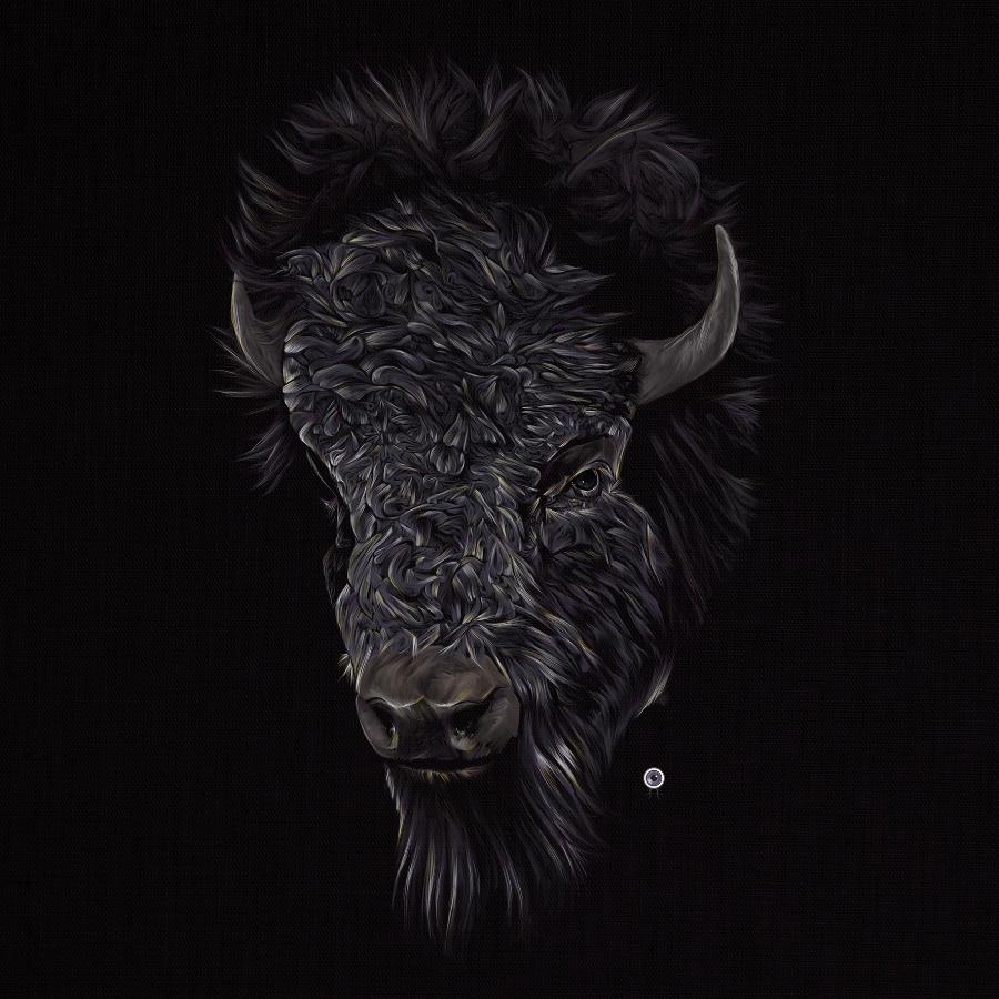 Bison/Buffalo