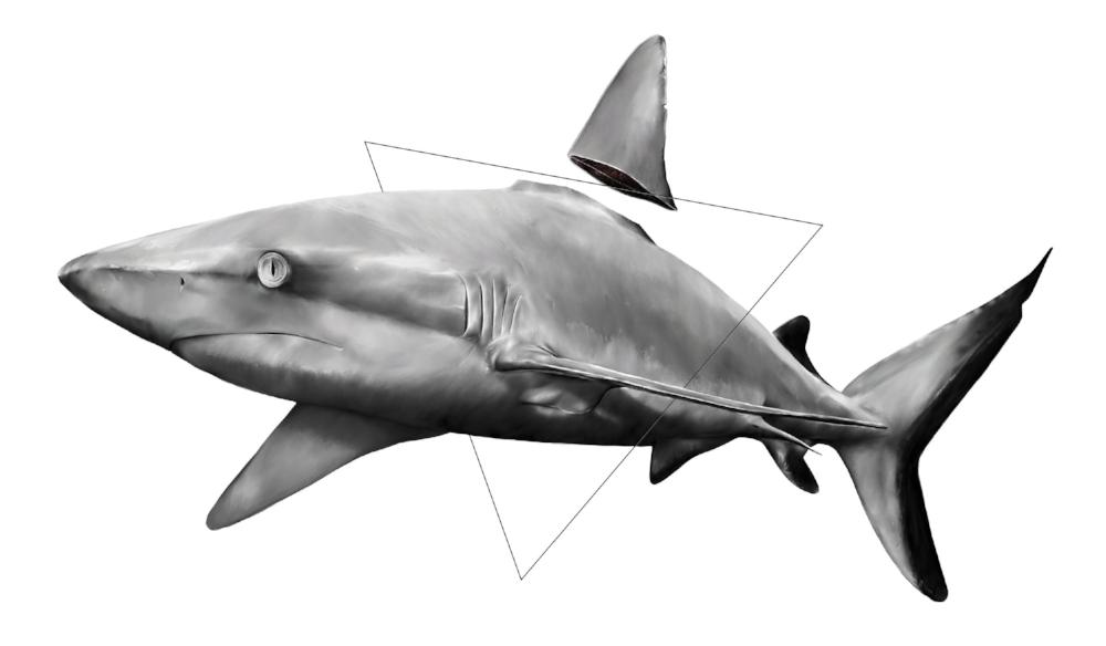 Kill the fin trade