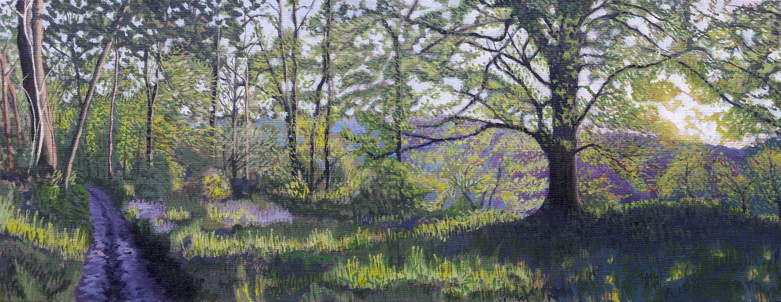 Bluebells on Lewesdon Hill, West Dorset