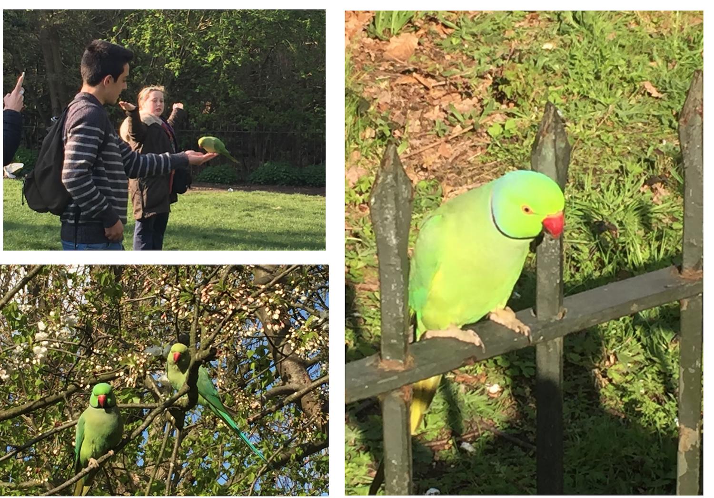 Feeding the tropical birds in Hyde Park