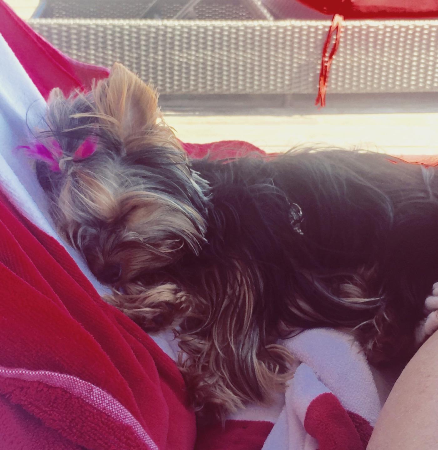 Sleeping on the Dock, Muskoka