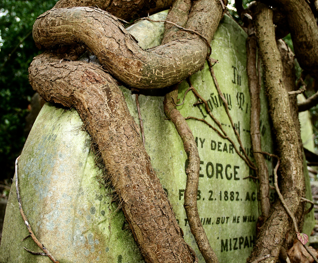 Tree roots wrapped around a gravestone in Highgate Cemetery, London