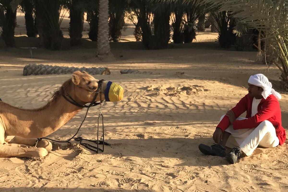 Camel and his Rider. Dubai