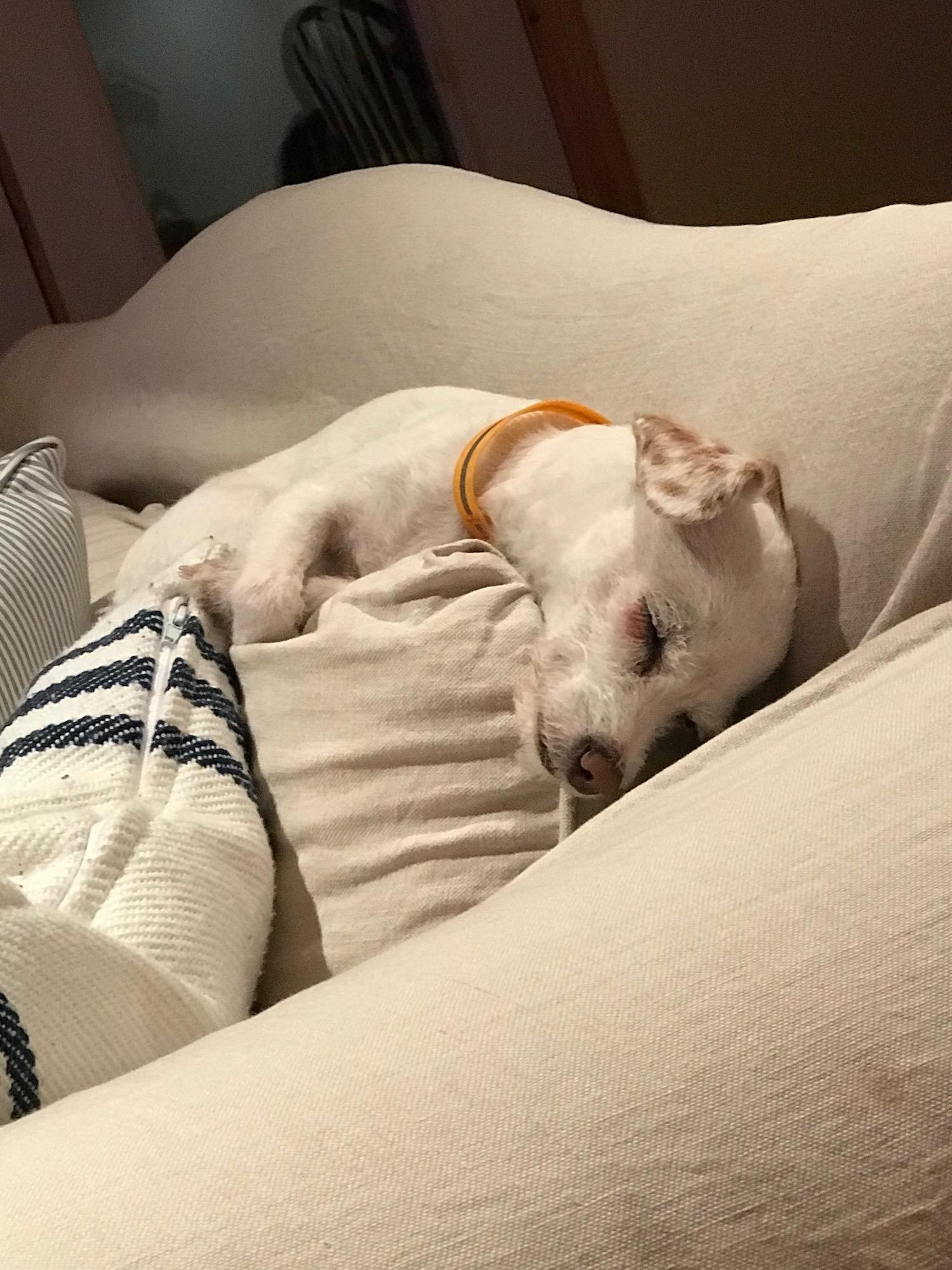 Cody Sleeping on Sofa.jpeg