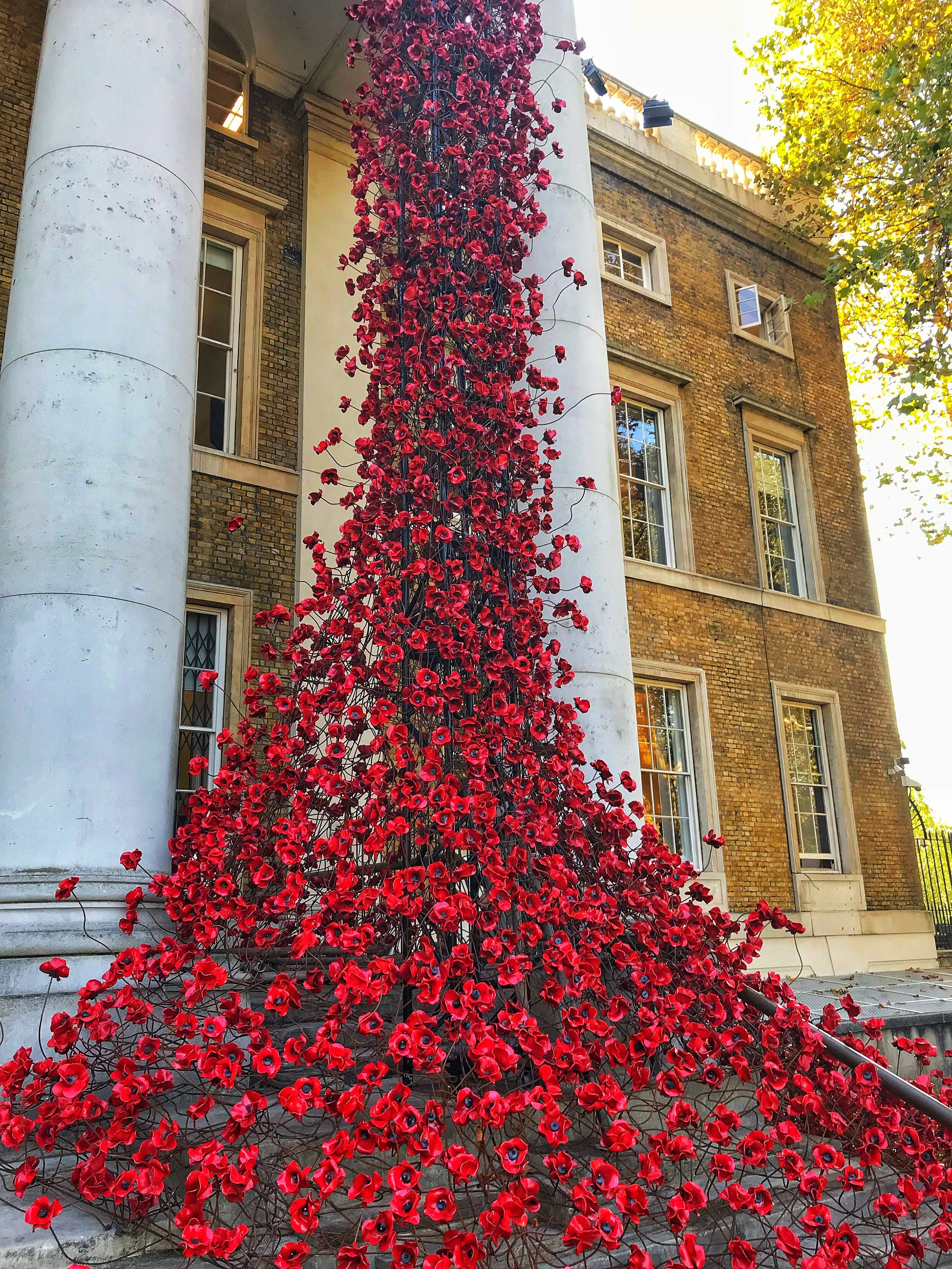 Imperial War Museum, Remembrance Day installation.