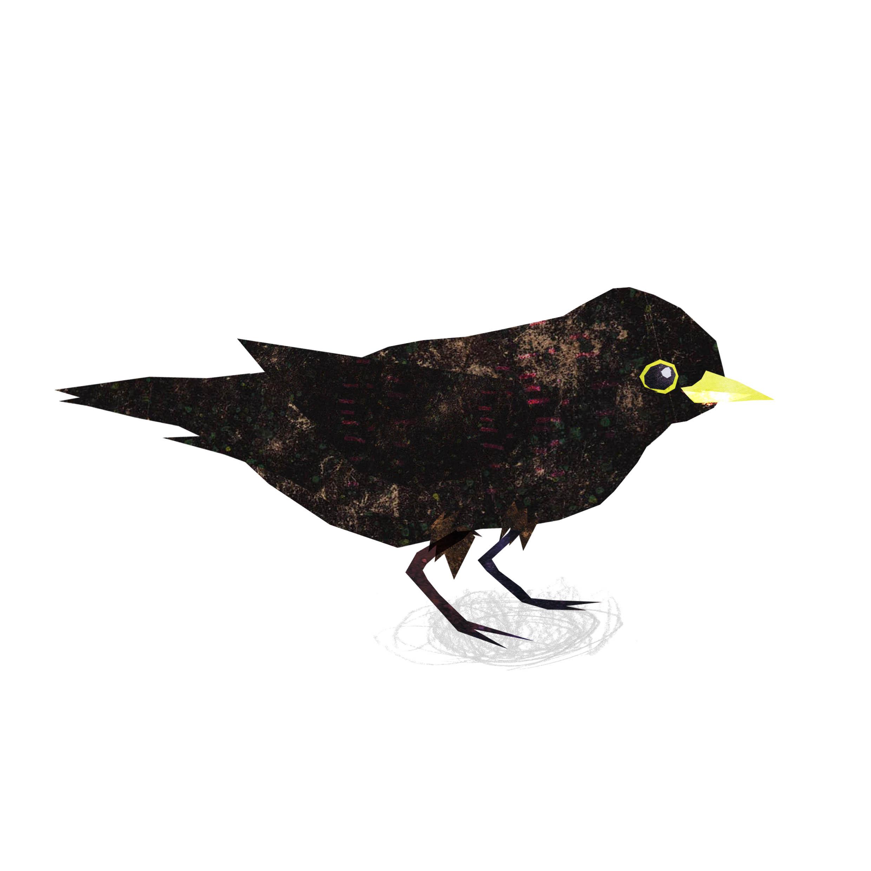 black bird.jpg