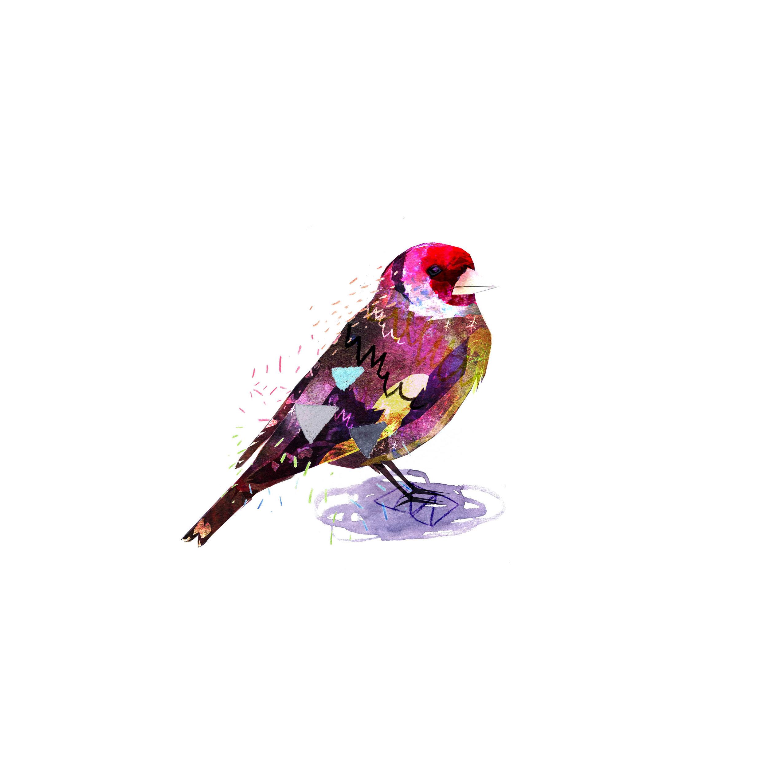 goldfinch for print.jpg