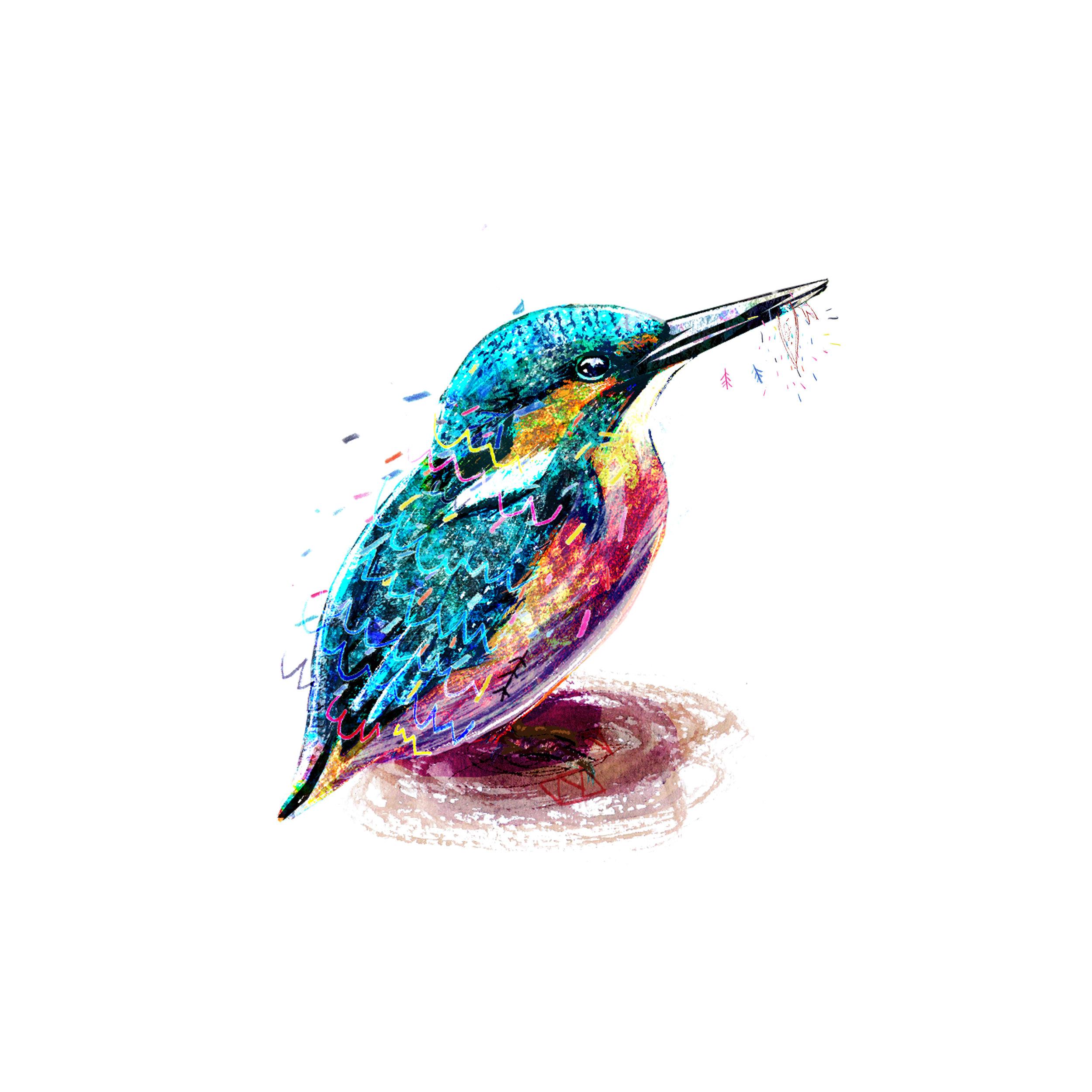kingfisher2.jpg
