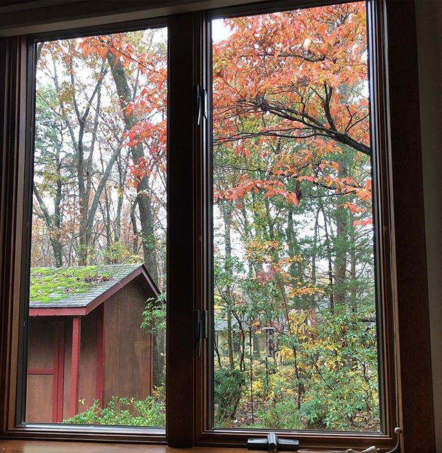 Enjoying a cool drizzly fall morning from our new location before going out to vote. : : Look closely. You may just spot a woodpecker. 😍 : Our phone company is still in the process of porting our phone number. Please send us an email at hello@pandanggophotography.com  if you need to reach us. : : #fall #fallleaves #morning #cool #vote #newlocation #justmoved #enjoy #happy #woodpecker #bird #birds #drizzle #rain #pandanggophotography #pandanggophoto
