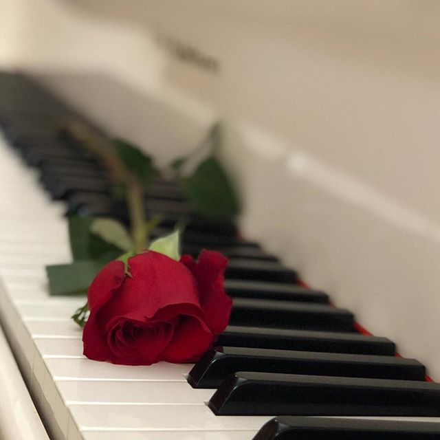 My funny Valentine... 🎶 How was your Valentines? ❤️ : : #valentines #valentine #love #rose #redrose #february #february14 #loveislove #instalove #lovewins #lovemonth #philadelphia #piano #lovesong #lovesongs #serenade #myfunnyvalentine #pianokeys #pianogram #piano #pandanggophotography #pandanggophoto