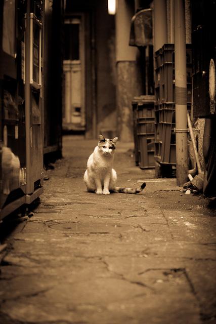Cat_in_alley