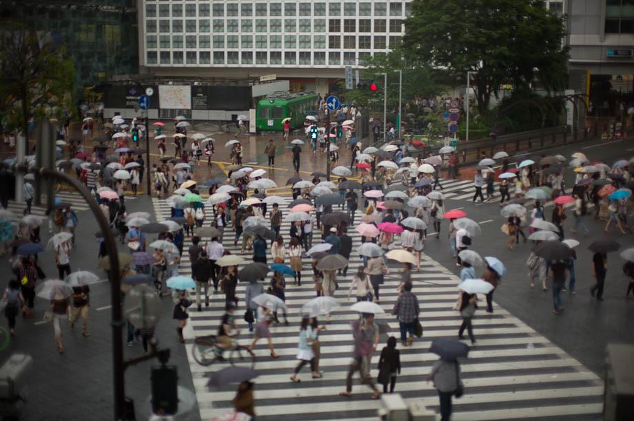 Rainy Shibuya Crossing
