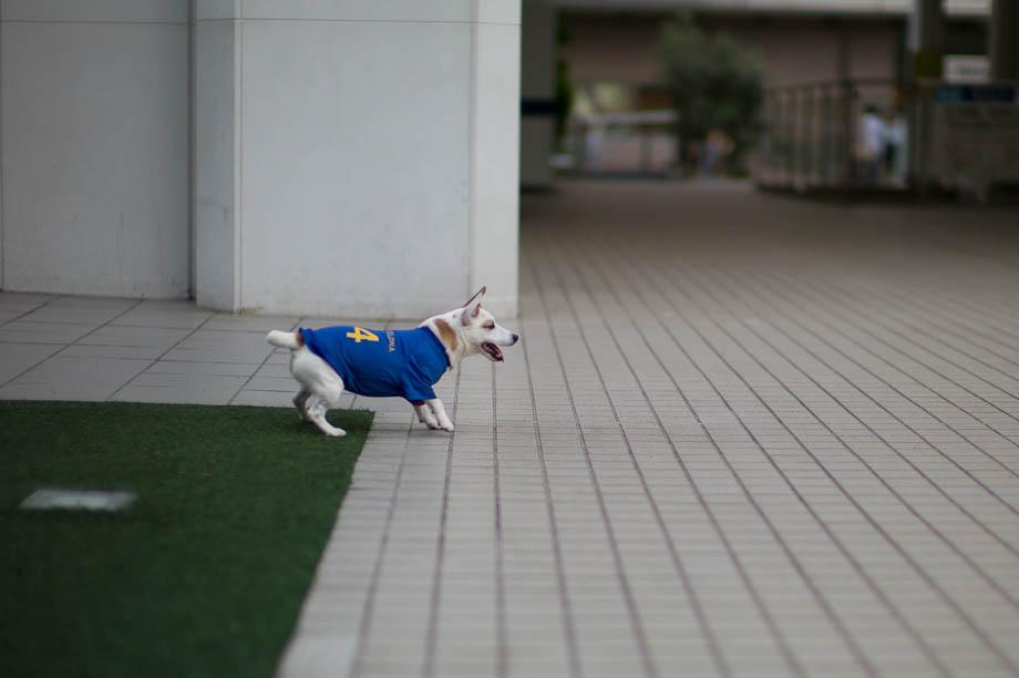 Soccer Dog in Tokyo Japan