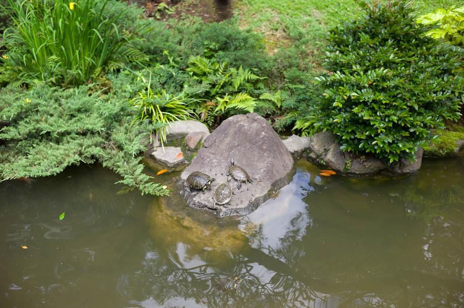 Turtles in Harajuku