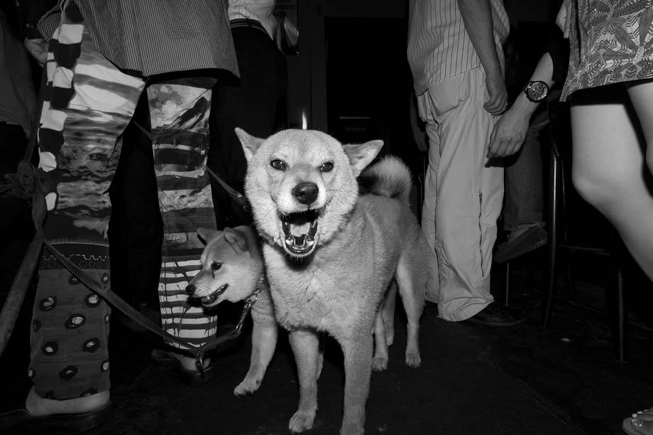 Dog in a bar in Tokyo