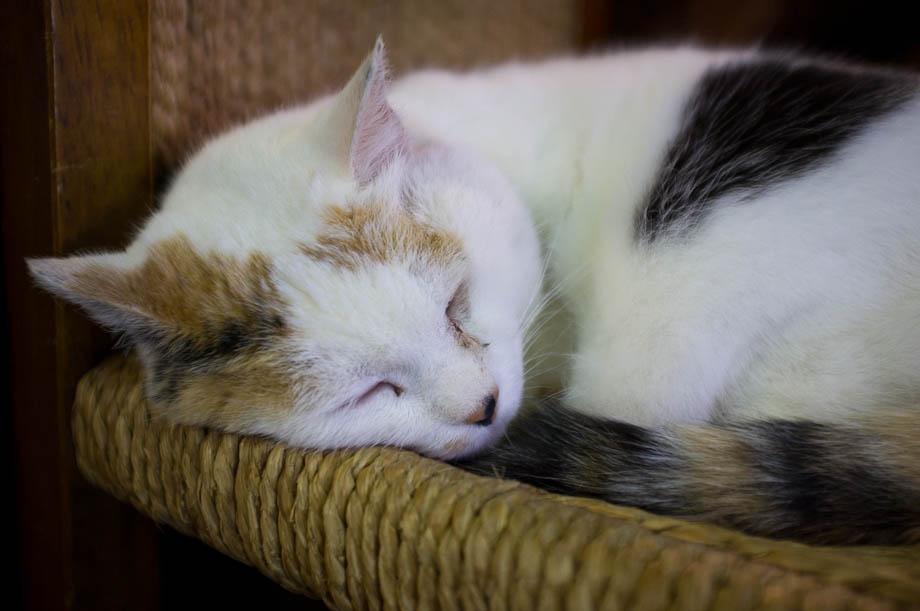 Cat in Golden Gai