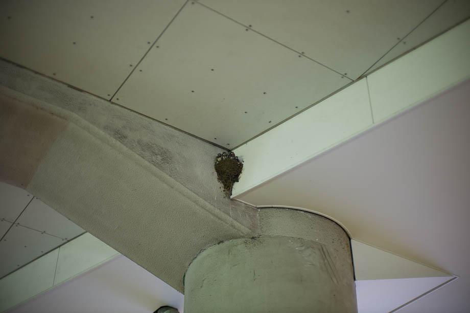 Birds Nest at Jiyugaoka Station