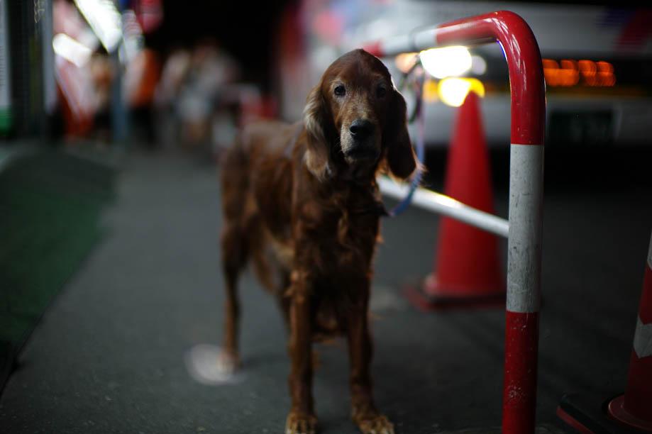 Dog in Shinjuku