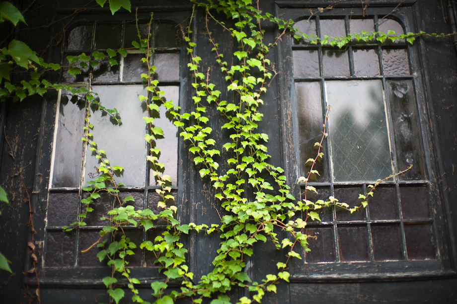 Vines on a building