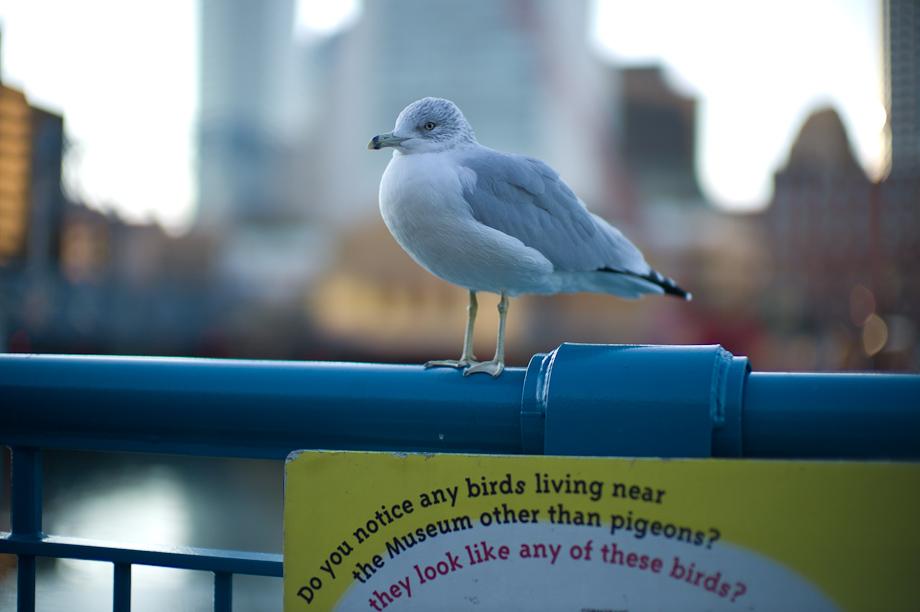 Birds in Boston