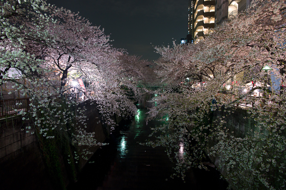 Cherry Blossoms at Meguro River