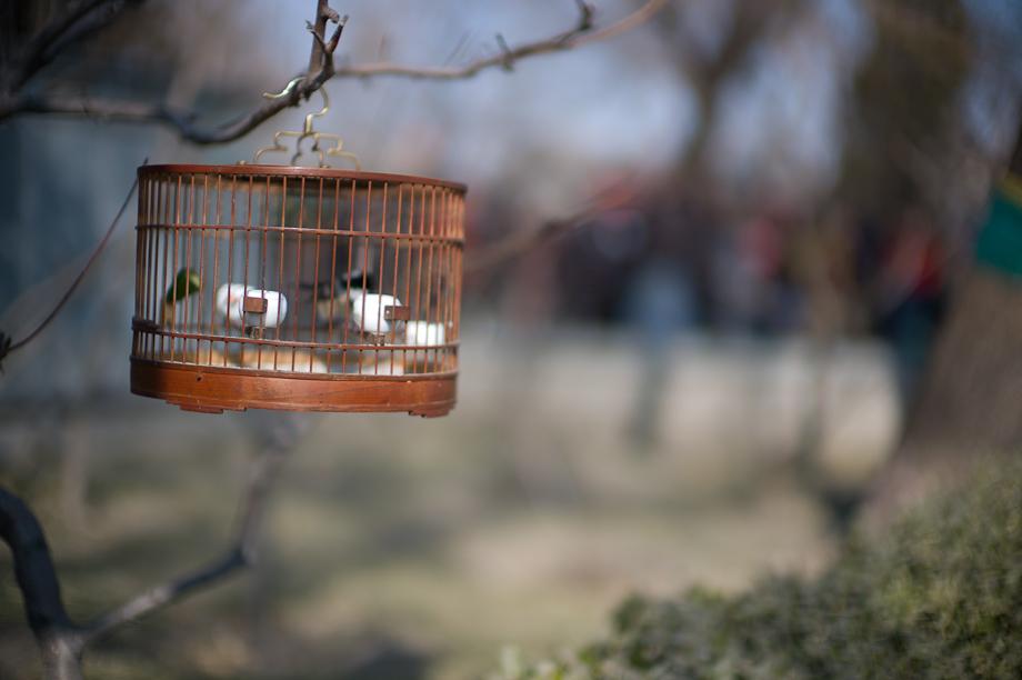 Birds in the Hutongs on Houhai Lake, Beijing, China