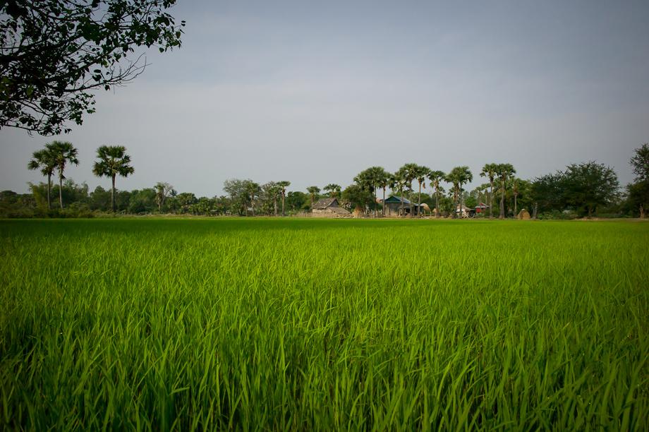 Tabitha's work in Cambodia