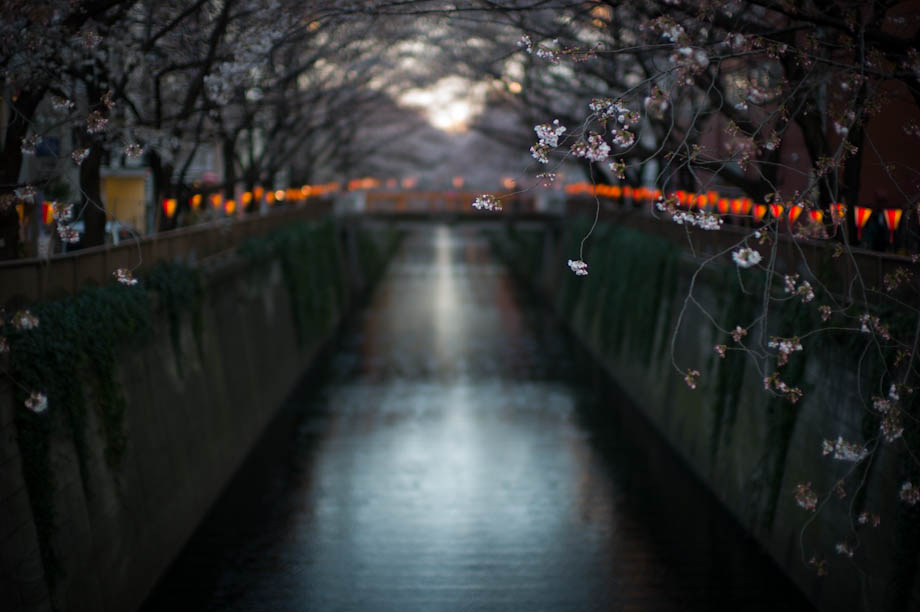 Cherry Blossoms on Meguro River in Nakameguro