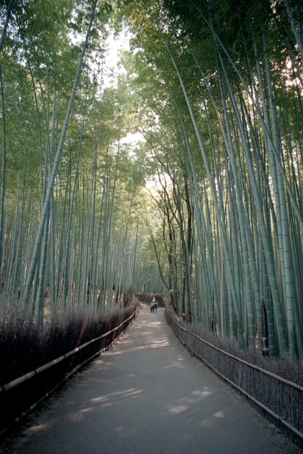 The Bamboo Forrest in Kyoto