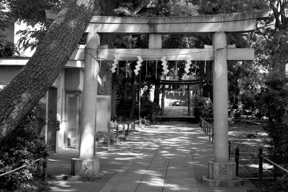 Jiyugaoka Shrine shot on TMAX 400 with a Mamiya 645