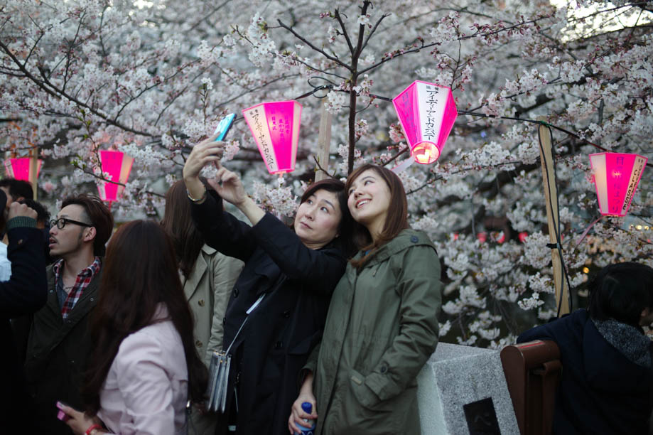Cherry Blossoms on Nakameguro River