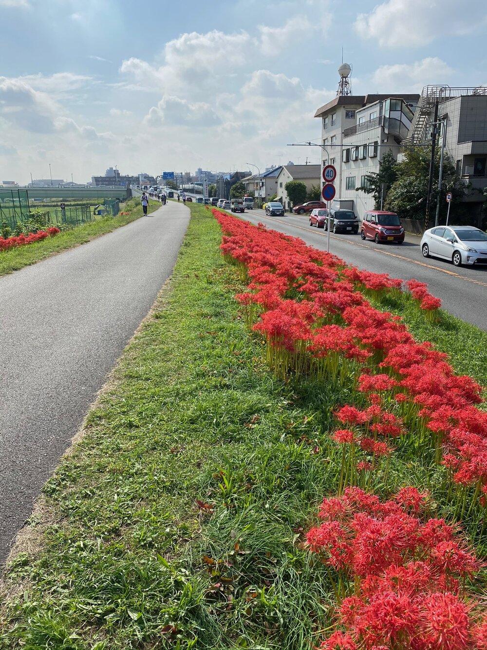 Tamagawa River Bike Path