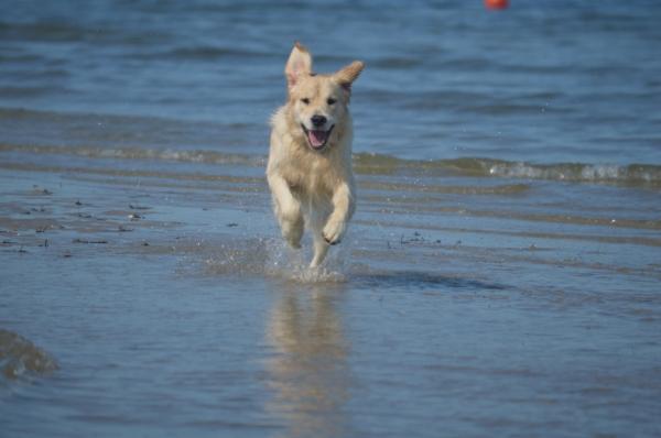 Beach Adventures!
