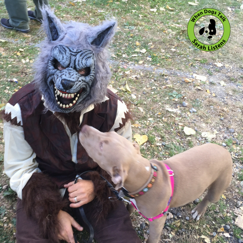 Front clip harnesses make socializing & walking relaxing for everyone. You never know when you're going to bump into a wolf but when you do you really need full range of your head to offer a polite greeting. A tense choke hold leads to defensiveness and/or anxiety.