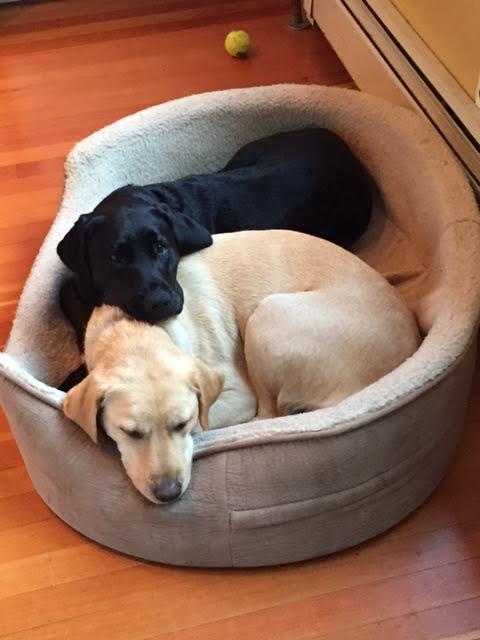 burke dogs.jpg