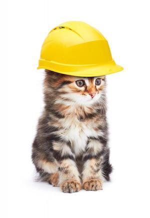 Under  Catstruction ….