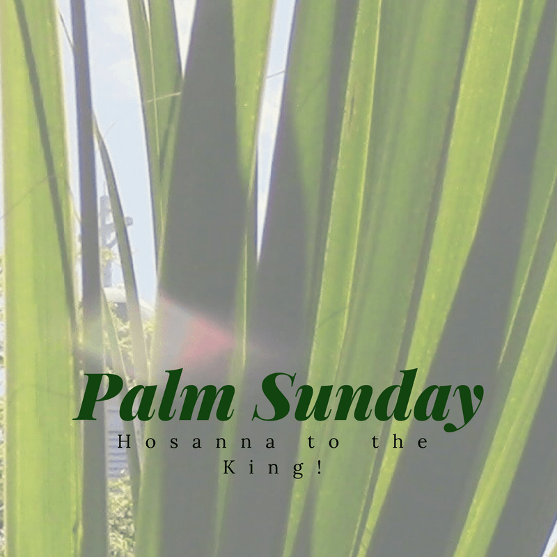 Palm Sunday (C).png