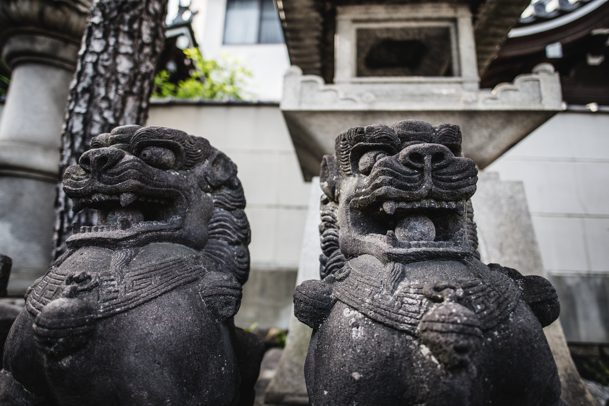 Komainu (狛犬), lion-dogs, are statue pairs of lion-like creatures guarding the entrance or the inner shrine of many Japanese homes and Shinto shrines